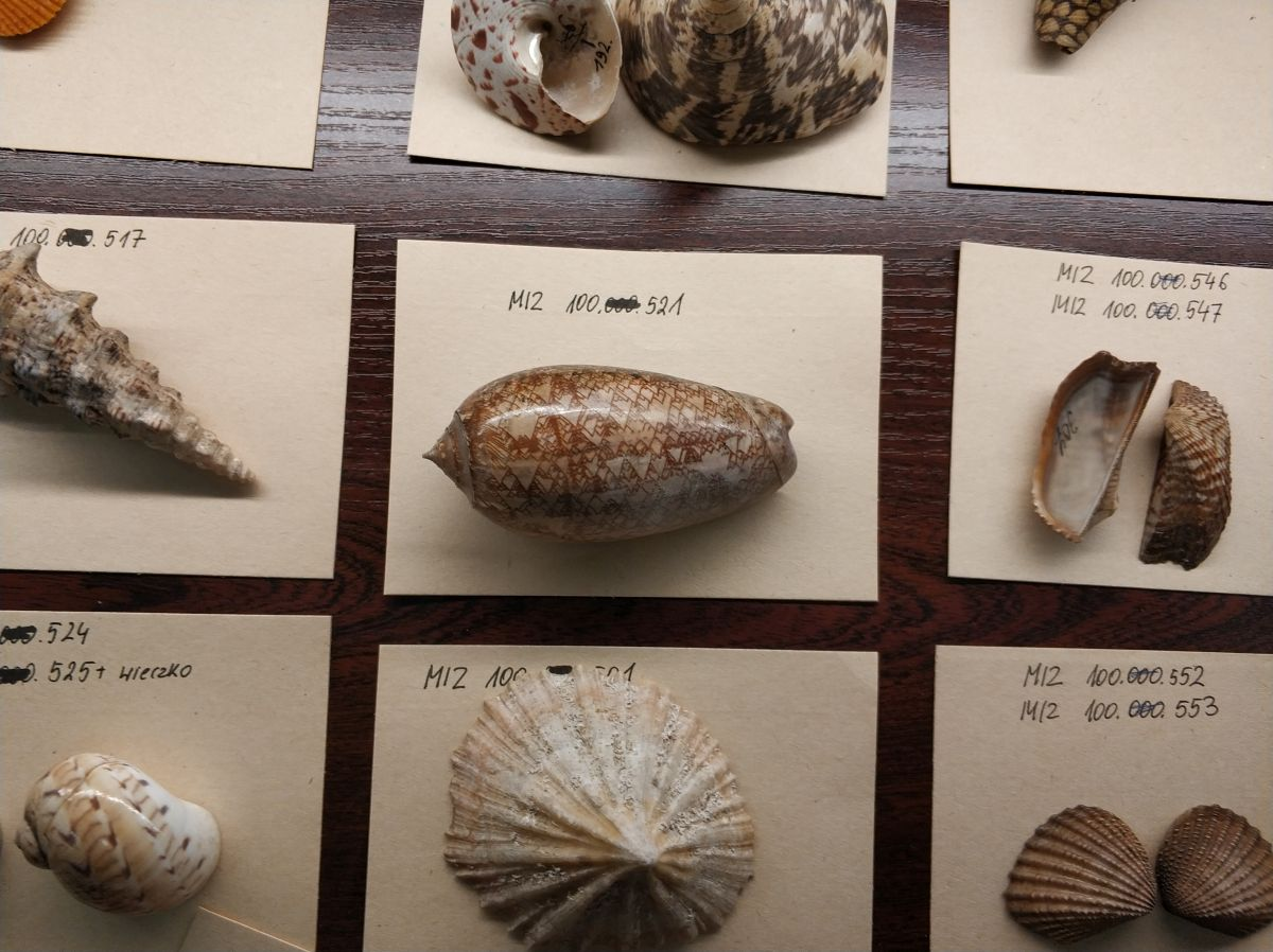 warszawa muzea